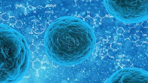 definición de células madre