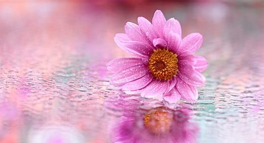 definición de flor de la vida
