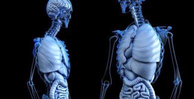 definición de anatomía.