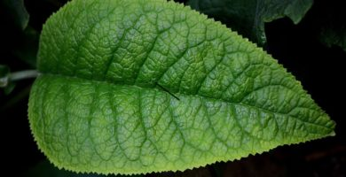 fotosíntesis.
